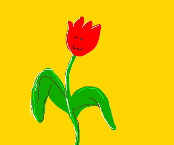 A pretty little tulip