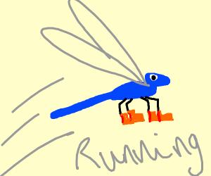 Damselfly Running