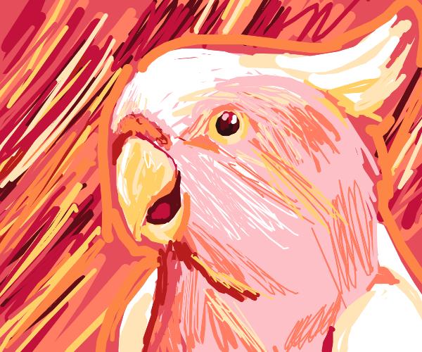 Birdie, Pink Birdie