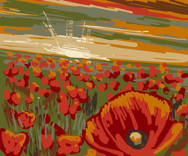 In Flanders Fields, poppies grow.