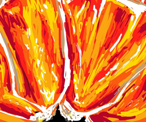 closeup of a citrus