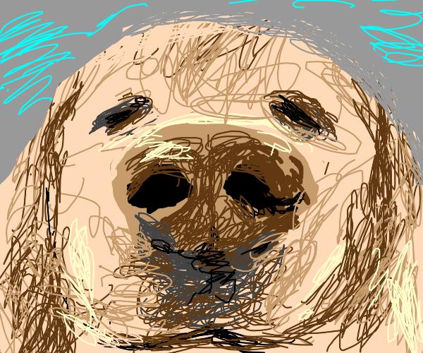 cute dog owo