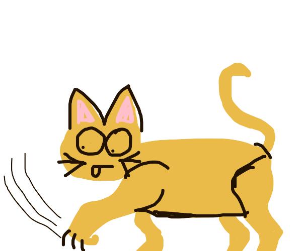 cat scratches floor