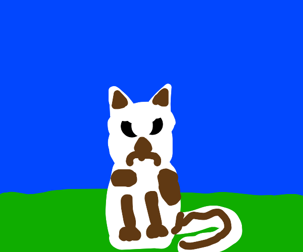 angry brown and white cat