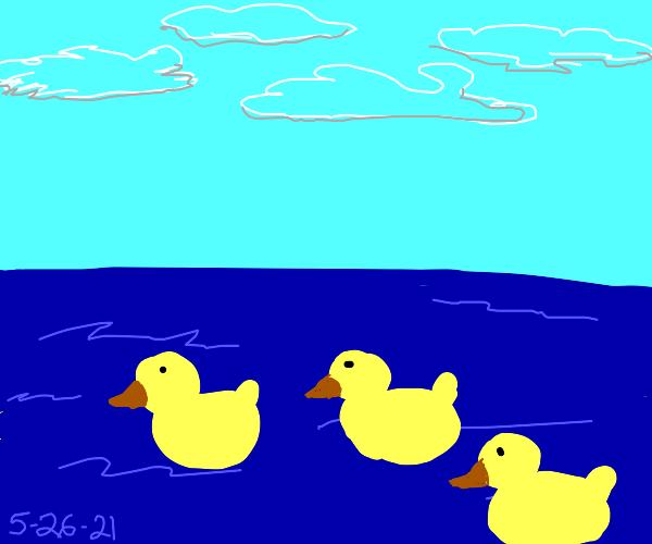 3 rubber ducks on water