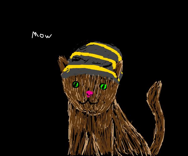 Cat in a beanie