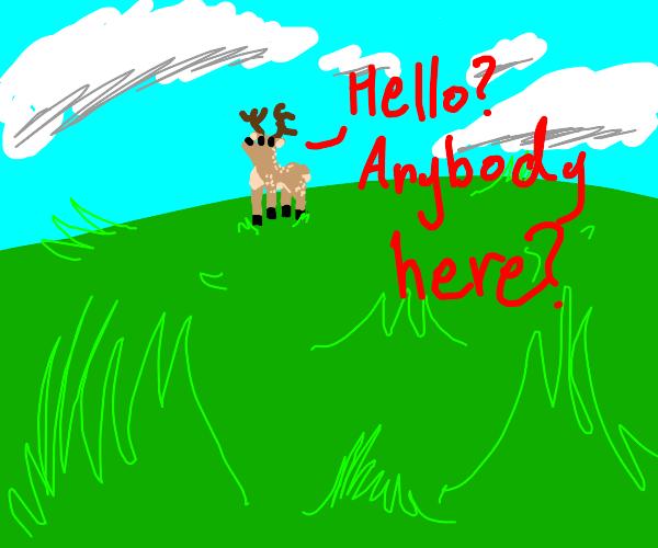 deer wondering where everybody is