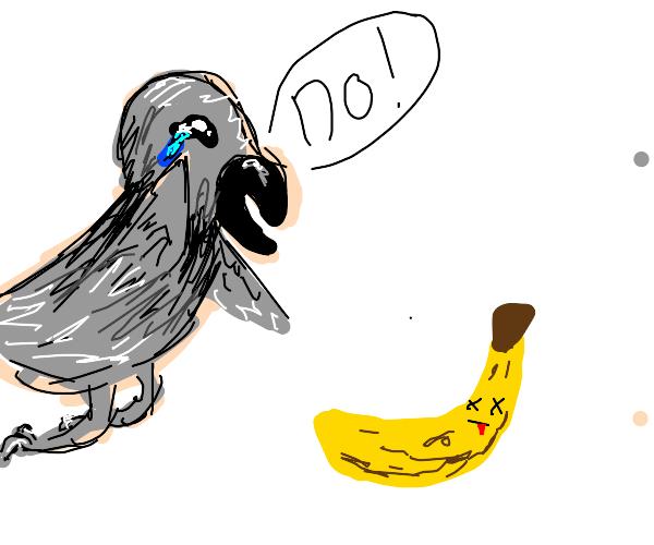 bird cries over the death of a banana