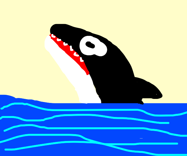 orca half out of the pool