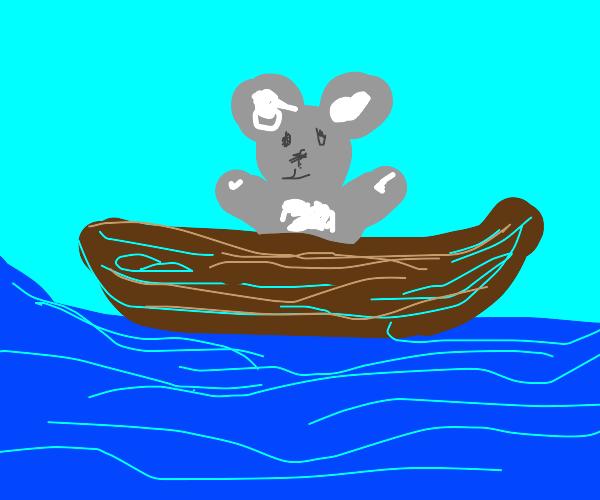 koala in a boat