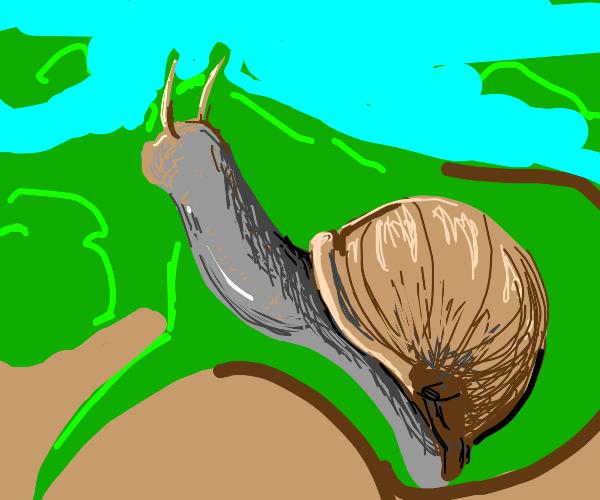 Snail climbs on leaf