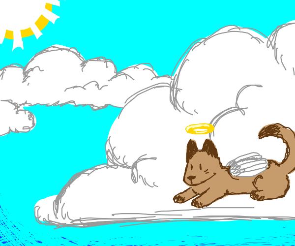 A dog in heaven