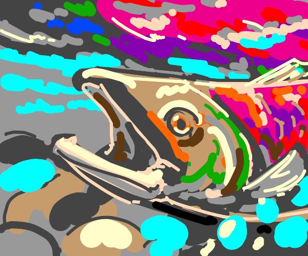 Salmon go swim swim swim