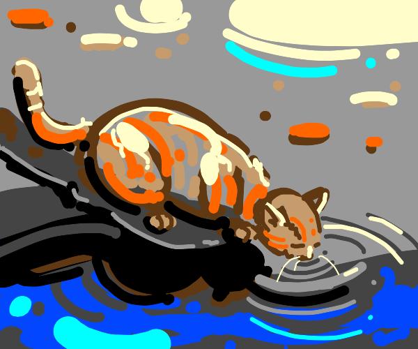 Cool cat lakeside