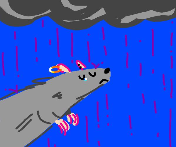 sad rat with ear pierced in purple rain
