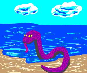 snake at the beach