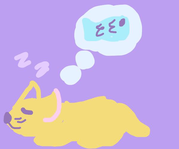 cat dreaming of eating fish