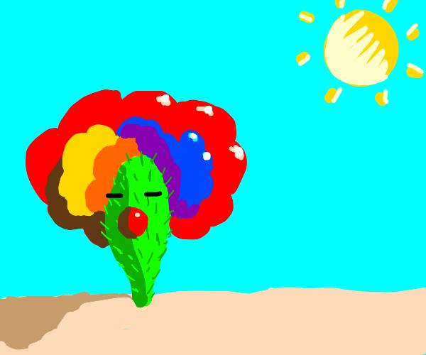 clown cactus