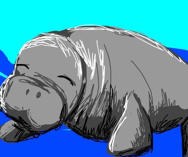 dugong sleeping underwater