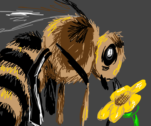 bee stares at flower