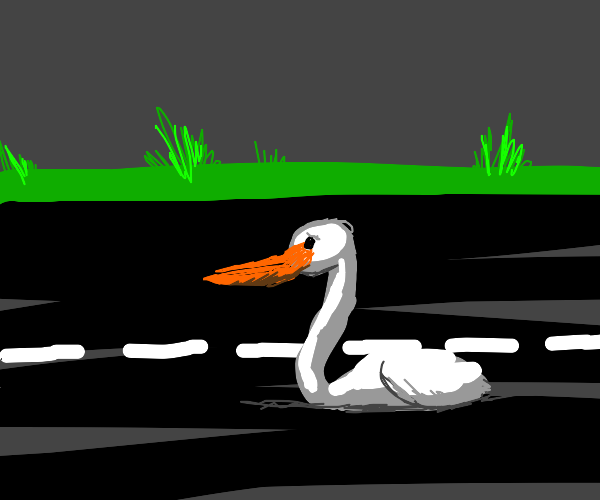 Pelican sinking into the Road
