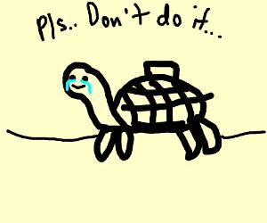Tortured Turtle