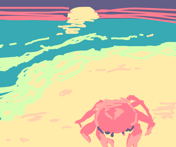 a red (pink) crab at a beach