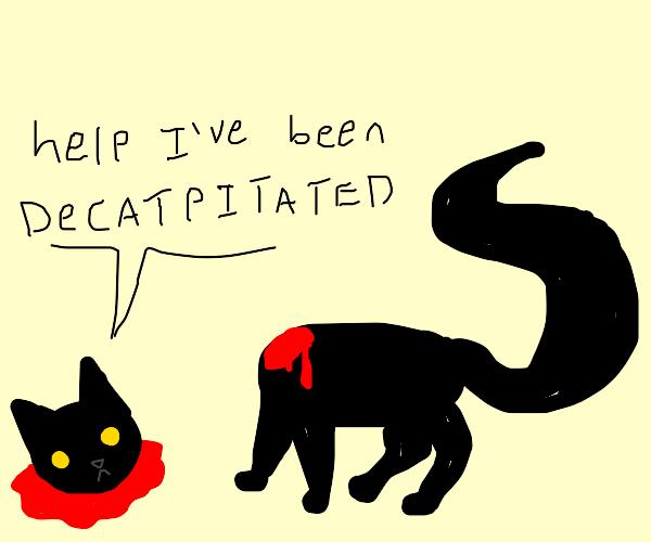 decapitated cat