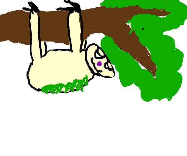 dangling sloth