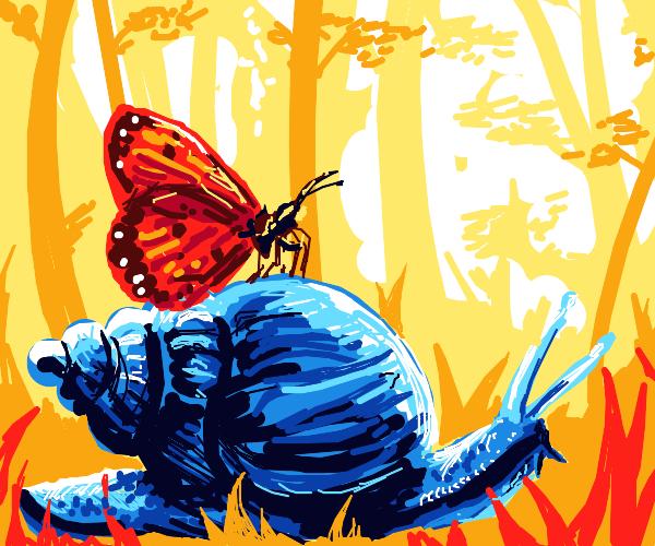 Monarch butterfly on snail