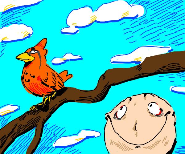 Bird sits on branch :)