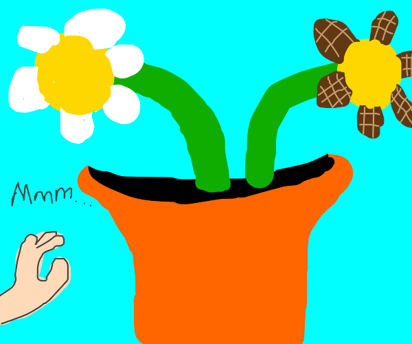 Plant with chocolate