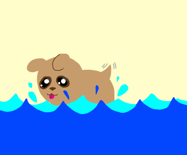 a puppy swimming