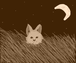 Wolf in a Grassland
