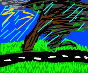 hurricane succs a tree