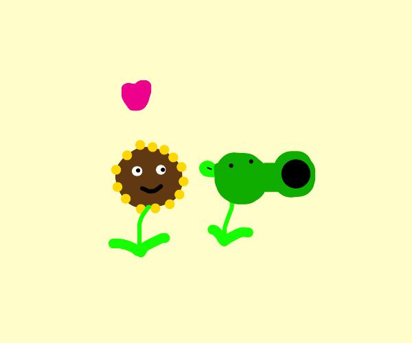 sunflower got a crush on peashooter