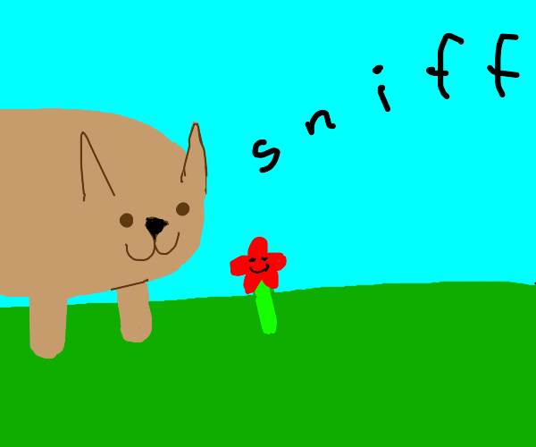 Dog sniffing a happy red flower on the ground