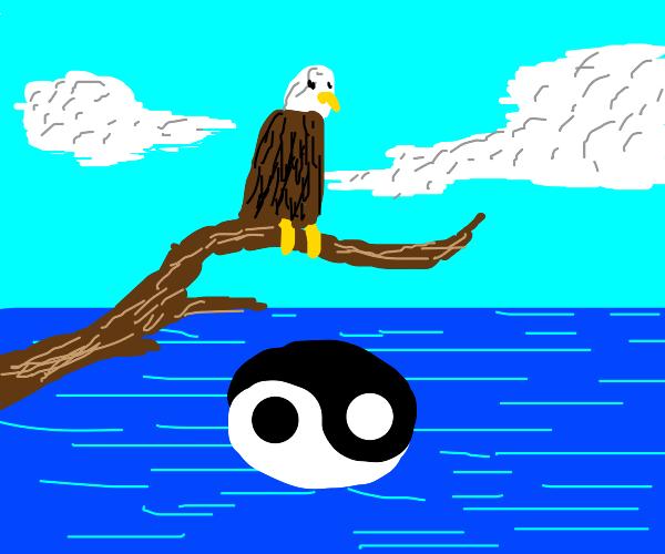 bald eagle above water with yin yang symbol