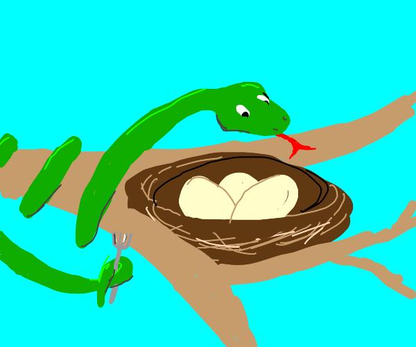 snake eating bird eggs from a birds nest