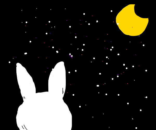 Bunny stares at starry night