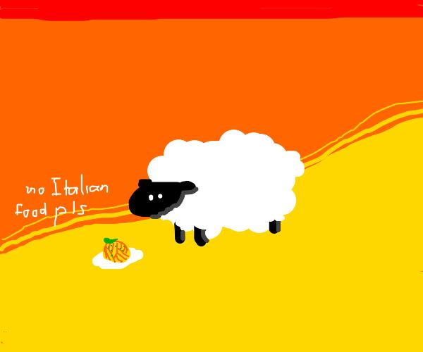Sheep doesn't like Italian food