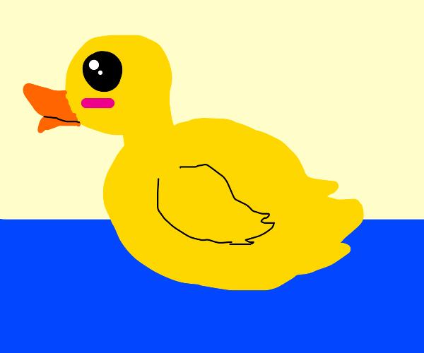 cute, round duck on still water