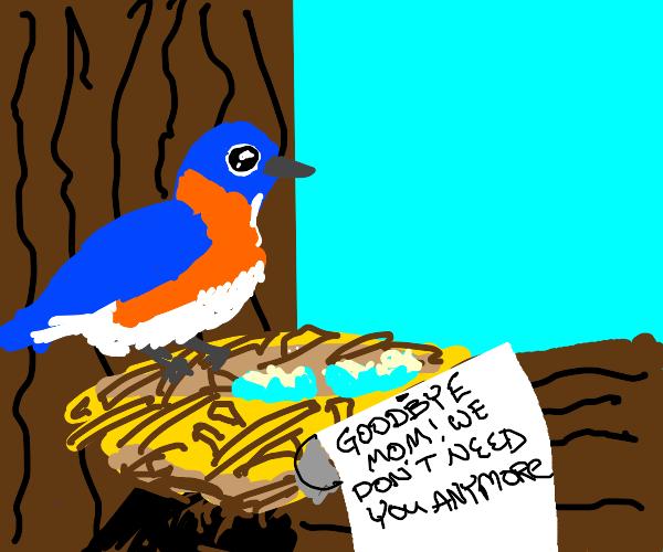 bird heartbreak :(