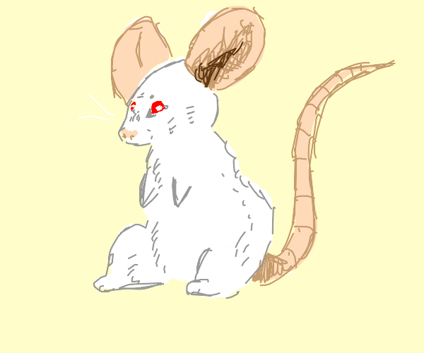 a standing mice