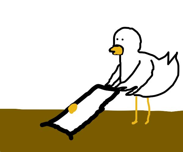 Chicken digging with a Door