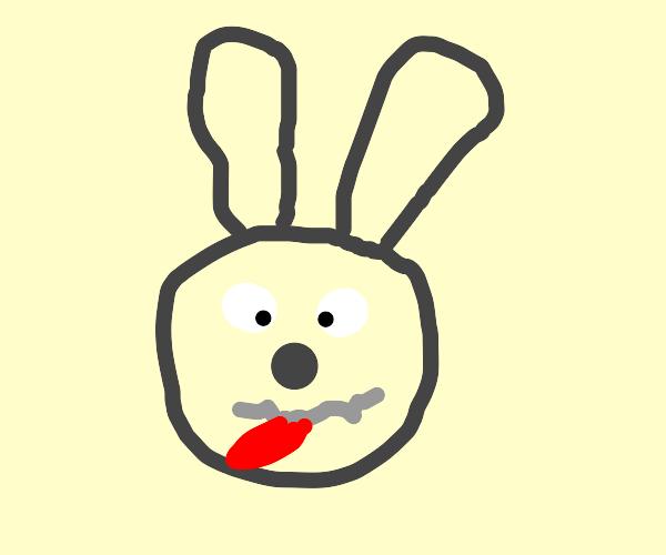 derpy rabbit