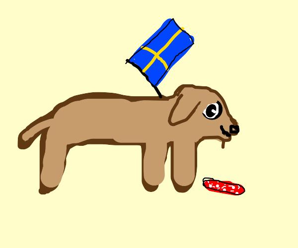 swedish dog eats salami