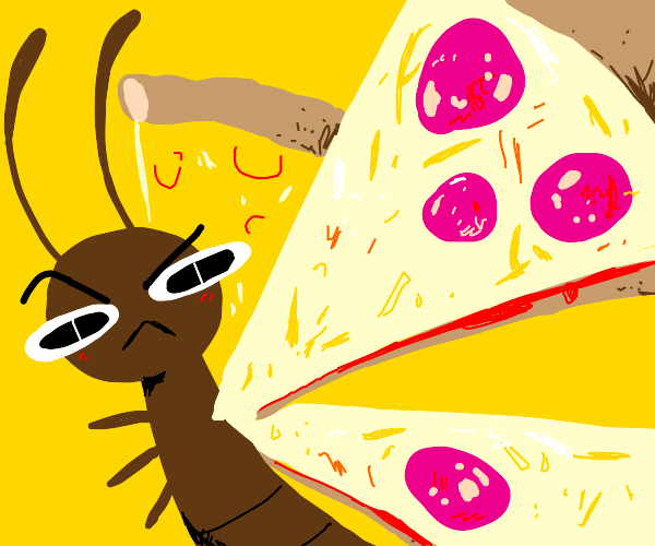 Pizza butterfly knows something