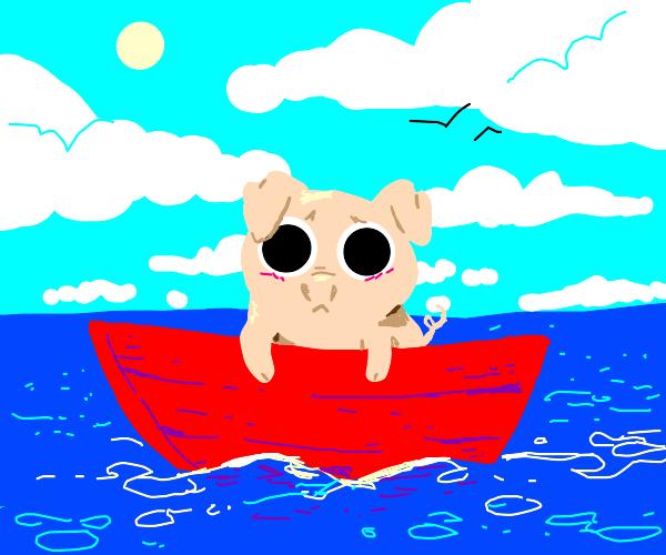 Pigglet on boat