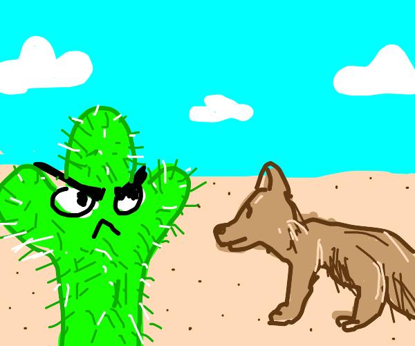 Cactus hates coyote
